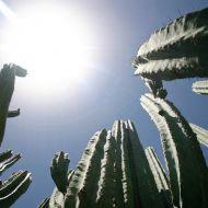 Hot sun and cactus